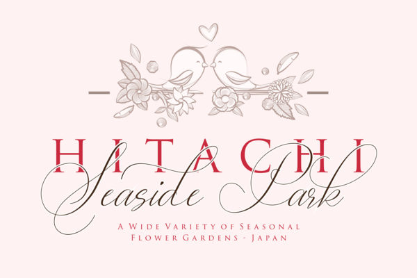 Lady Suettaya in Calligraphy Fonts