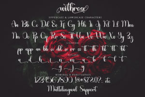 Withrose in Calligraphy Fonts