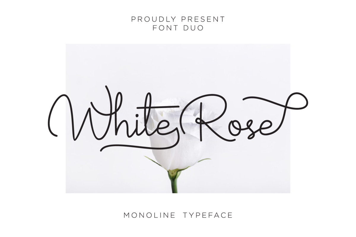 White Rose - Elegant Handwritten Font in Calligraphy Fonts